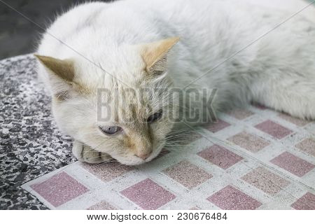 Fluffy Domestic Cat Chilled On The Table, Stock Photo