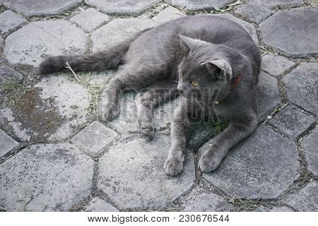 Fluffy Domestic Cat Chilled On The Floor, Stock Photo