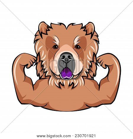 Chow Chow Dog With Muscules. Vector Illustration Portrait Of Dog. Isolated On White Background.
