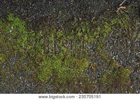 Green Natural, Moss Covered, Rock Texture Over Stone Wall In Uk. Texture