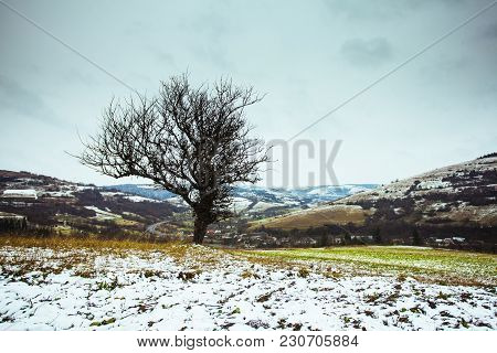 Autumn And Winter Are Meeting On The Fields. Lonely Tree In The Fields