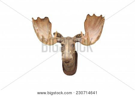 The Head And Antlers Of A Male Moose Animal.