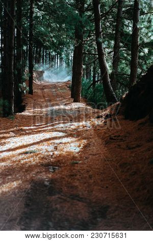 Evergreen Coniferous Forest On An Early Morning. Sunbeams Are Falling On The Foot Path.