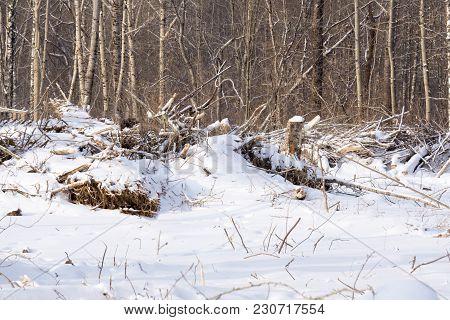 Broken Tree Under The Snow Ead Destruction,
