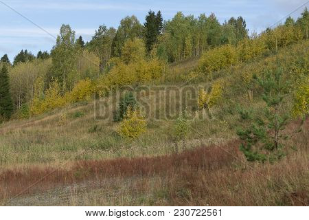 Moss Covered Lava Rocks And Miniature Birch Trees In Southern Iceland At Lakagigar Or Laki Where A V