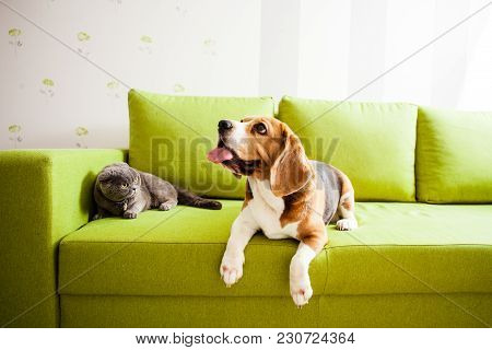 The Cat And The Dog Are Lying On The Green Sofa In The Room