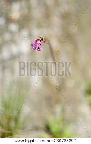 The Grass And Pink Flower With Defocused Background