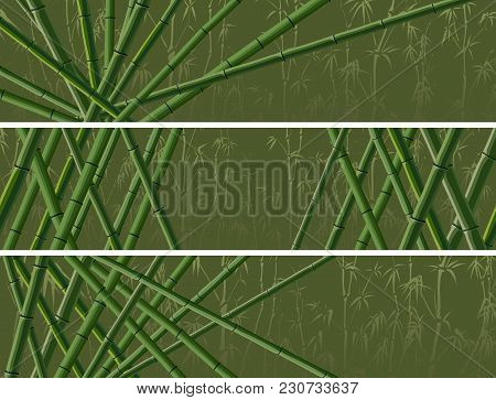 Set Of Vector Horizontal Banner With Many Trunks Bamboos Tree In Green Color.