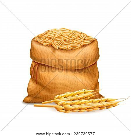 Vector Realistic Bag With Purified Wheat Grains, Barley With Wheat Ears Isolated On White Background