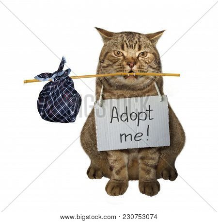 The Loneliness Cat With A Sign Around His Neck Is Looking For A New Owner. White Background.