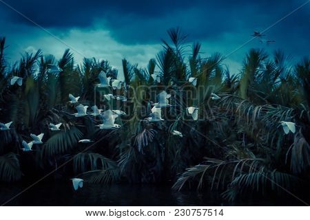 A Flock Of Birds Flies At The Lagoon Near Tangalle, Sri Lanka. White Tropical Birds Go To Their Coll