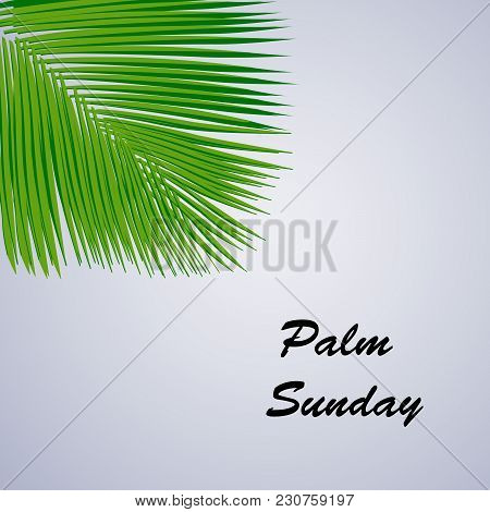 Illustration Of Palm Leaves With Palm Sunday Text On The Occasion Of Christian Moveable Feast Palm S