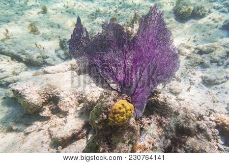 Coral in the Caribbean Sea of Mexico