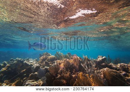 Fishes swimming in the Caribbean Sea of Mexico