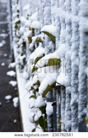 Leaves Outside Metal Bars, With Snow