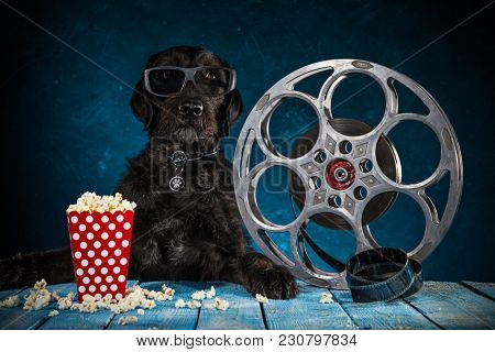 Black funny dog with retro film production accessories, close-up.