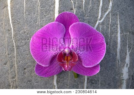 Pink orchid and one striped stone texture