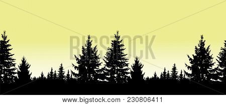Seamless Landscape. Silhouette Of Coniferous Trees On The Background Of Yellow Sky.