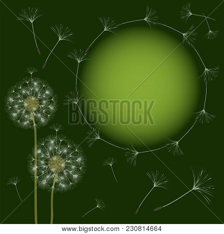 Abstract Frame Of A Dandelion For Design. The Wind Blows The Seeds Of A Dandelion. Template For Post