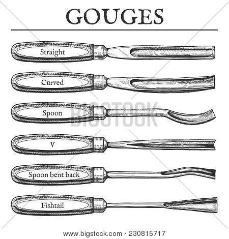 Vector Illustration Of Gouge Types Set. Straight, Curved, Spoon, V, Bent Back, Fish Tail, Fishtail B
