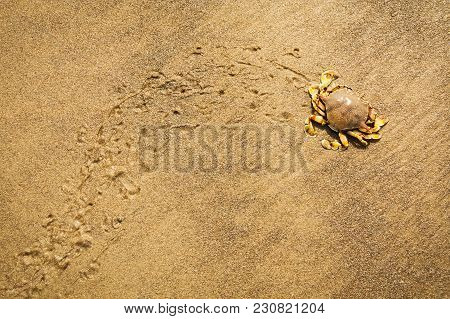 Crab Leavig Trace On The Wet Sand On The Beach