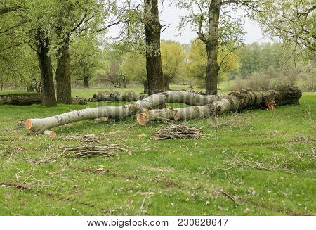 Deforestation, Global Problem, The Felled Trees On The Green Grass