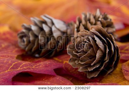 Trio Of Pine Cones