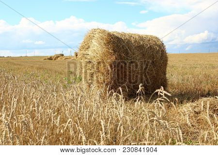 The Sheaf Of Hay On The Field In Siberia