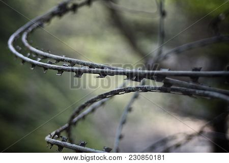 A Close-up Of A Tangled Barbed-wire Fence With Fierce Jagged Edges And Blurry Background.