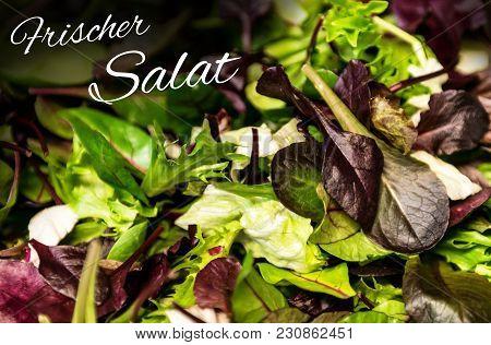 German Text Frischer Salat Means Fresh Salad With Mixed Greens Lettuce Arugula, Mesclun Mache Close