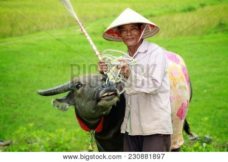 A Local Vietnamese Farmer Standing In Rice Fields, Smiling And Showing Off Is Prized Cow To Tourists