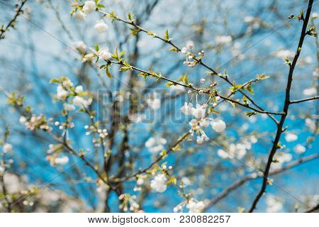 Sunny Spring Nature With Spring Flowers Blooming In The Garden, Colorful Spring Landscape Scene