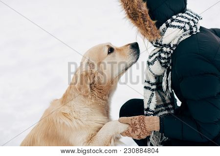 Image Of Labrador Giving Paw To Woman In Black Jacket On Winter Day At Park