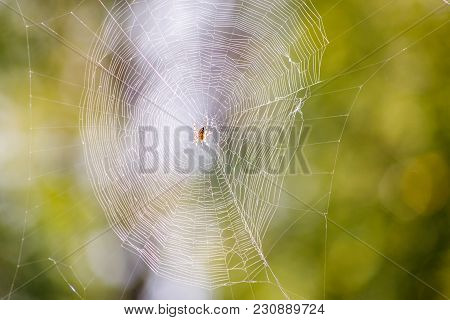 Photo Of Spider On Spider Web On Blurry, Green Background