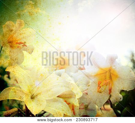 Textured old paper background with flowers  lilly