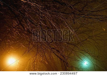 Yellow And Green Bright Night Light Of Lanterns With Bare Shining Branches