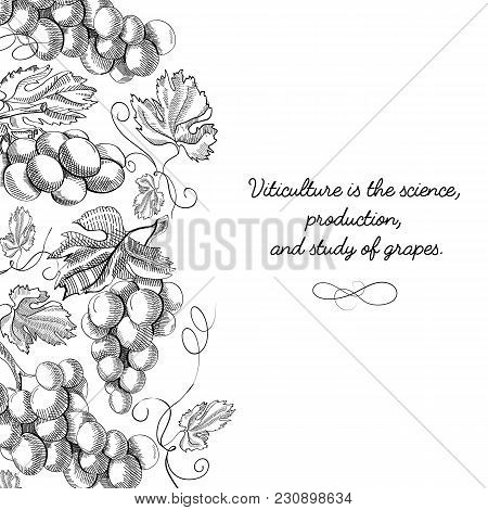 Original Decorative Design Original Postcard Doodle Hand Drawn With Lettering About Viticulture Is S