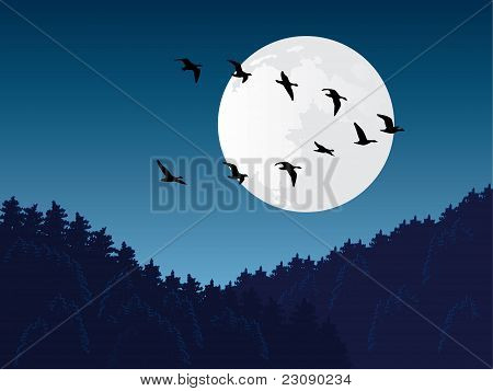 Bird migration vector