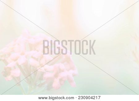 Soft Blur Spike Flower Abstract Background With Pastel Color Filter