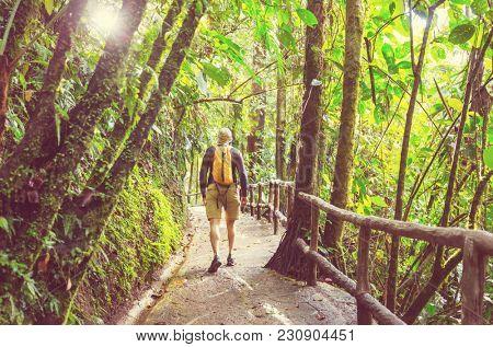 Hiking in green tropical jungle, Costa Rica, Central America