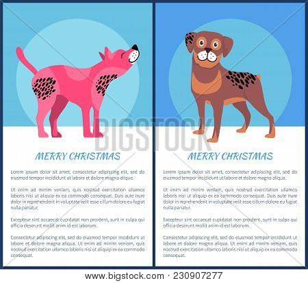 Merry Christmas Festive Banner With Dogs. American Hairless Terrier With Pink Skin And Friendly Rott