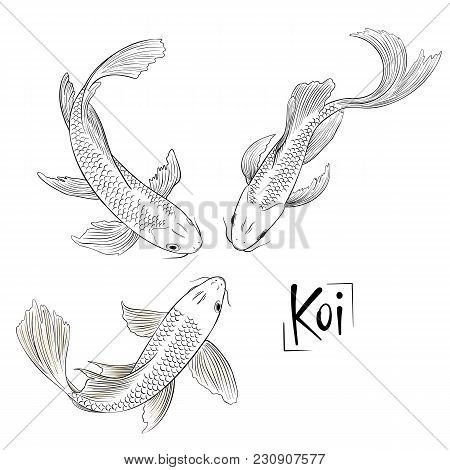Hand Drawn Outline Vector Trio Of Koi Fish Isolated