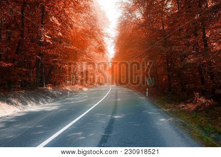 Asphalt Road Through Sunny Fall Colors Forest