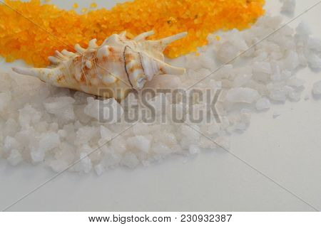 Useful Large Sea Salt And Shell, White Background