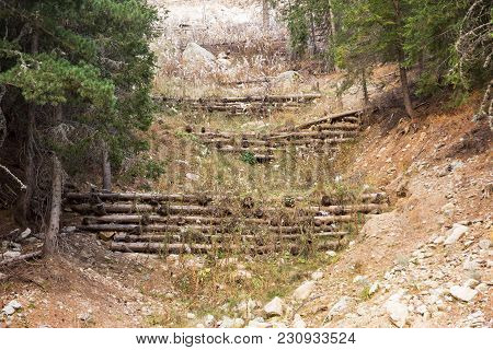 Carvel Pines Lie On The Plot. Timber Harvesting In The Coniferous Forest. Stumps And Logs Show That