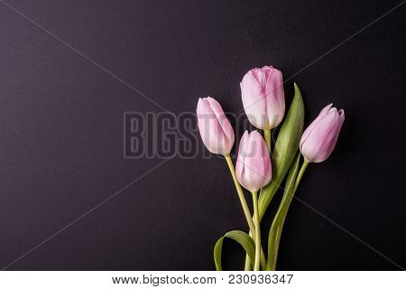 Pink Flowers On A Dark Background. Studio Shot. Flat Lay. Copy Space.