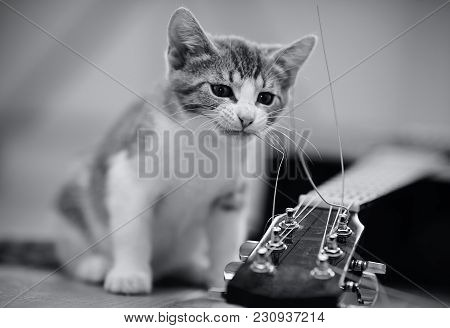Not The Color Image Of A Curious Kitten Plays With A Guitar String.