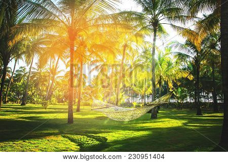 Hammock In Tropical Coconut Palm Grove With Sunspot And Sunbeams