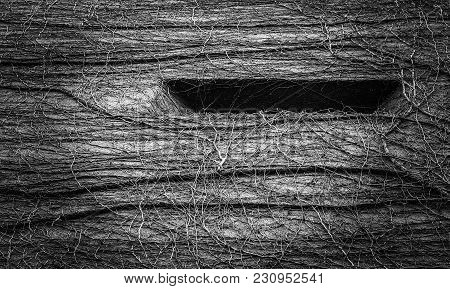 Natural Abstract Pattern Created By Vines Growing A Building. Wild And Surreal Textured Pattern In B