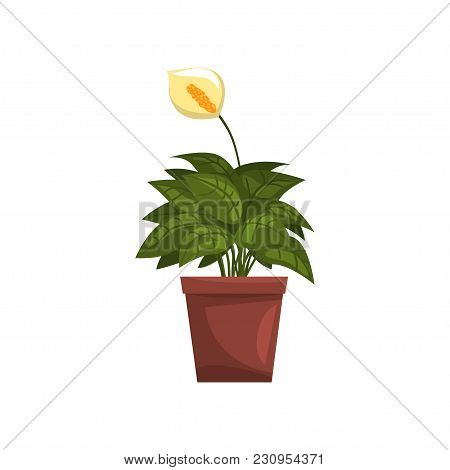 Spathiphyllum Indoor House Plant In Brown Pot, Element For Decoration Home Interior Vector Illustrat